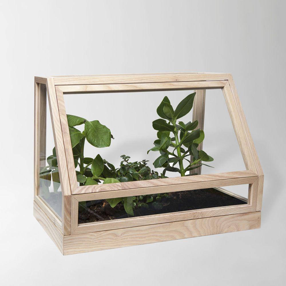 Greenhouse Mini: Mini-serre d\'intérieur en bois de frêne teinté ...